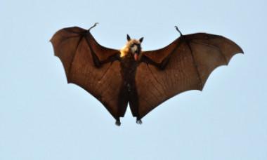 """Un alt virus, provenit tot de la lilieci din Asia, ar putea declanșa o nouă pandemie mortală. Nipah """"erupe"""" periodic în Bangladesh"""