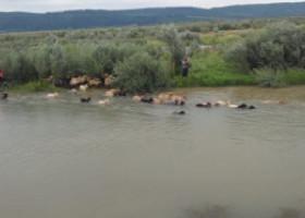 Ciobanul din Olt căutat în apele unui râu, după ce i s-au înecat oile, a fost găsit. Plecase să-și caute un loc de muncă