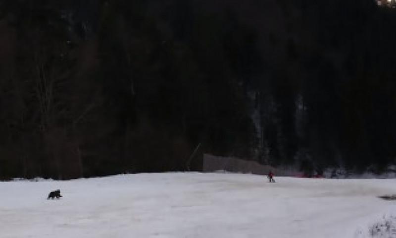 VIDEO. Schior fugărit de urs pe o pârtie din Predeal