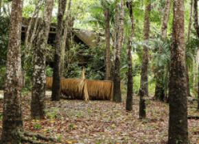 Bucăţi uriașe din pădurea tropicală amazoniană sunt scoase la vânzare ilegal pe Facebook