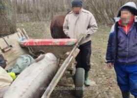 VIDEO. Momentul în care un morun de 140 de kilograme, prins de braconieri, este eliberat în apă