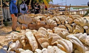 GALERIE FOTO. Sechestru record în Filipine. 200 de tone de scoici gigantice în valoare de 25.000 de dolari au fost confiscate