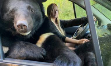 GALERIE FOTO Imagini surprinzătoare din Rusia. O tânără călătorește în mașină cu o ursoaică pe locul pasagerului din dreapta