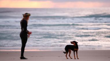 """Fotografia care """"a frânt"""" inima internetului: câinele care își așteaptă stăpânul pe plaja unde acesta și-a pierdut viața"""