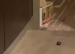 """Imagini neverosimile de la Melbourne! O jucătoare a fost """"vizitată"""", din nou, de un șoarece în camera de hotel"""