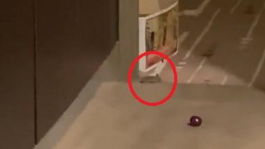 Reacţia autorităţior, după ce sportivii au postat imagini cu şoarecii care zburdă prin camerele de hotel din Australia