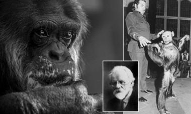 Rușii au încercat să creeze un hibrid om-cimpanzeu. Ce s-a întâmplat cu acest experiment inedit