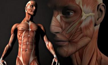 Descoperire revoluționară despre corpul uman. Așa ceva nu vei citi în cărțile de anatomie