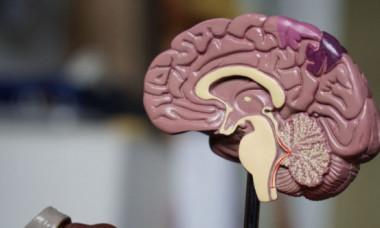 Vârsta la care creierul încetează să mai producă neuroni