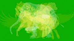 Primul animal pe care il vezi in aceasta poza dezvaluie ce fel de persoana esti