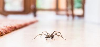 De ce nu trebuie să omori păianjenii pe care îi găsești în locuință, potrivit entomologilor