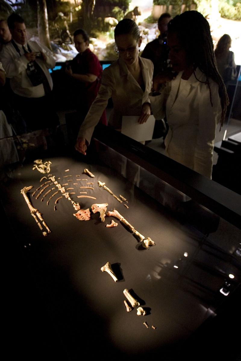 Hominid, expozitie muzeu